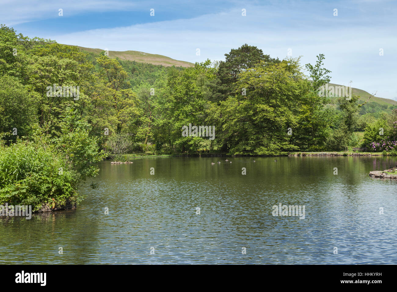 The Fishpond, Craig-y-Nos Country Park, Pen-y-cae, Brecon Beacons National Park, Powys, South Wales, UK - Stock Image