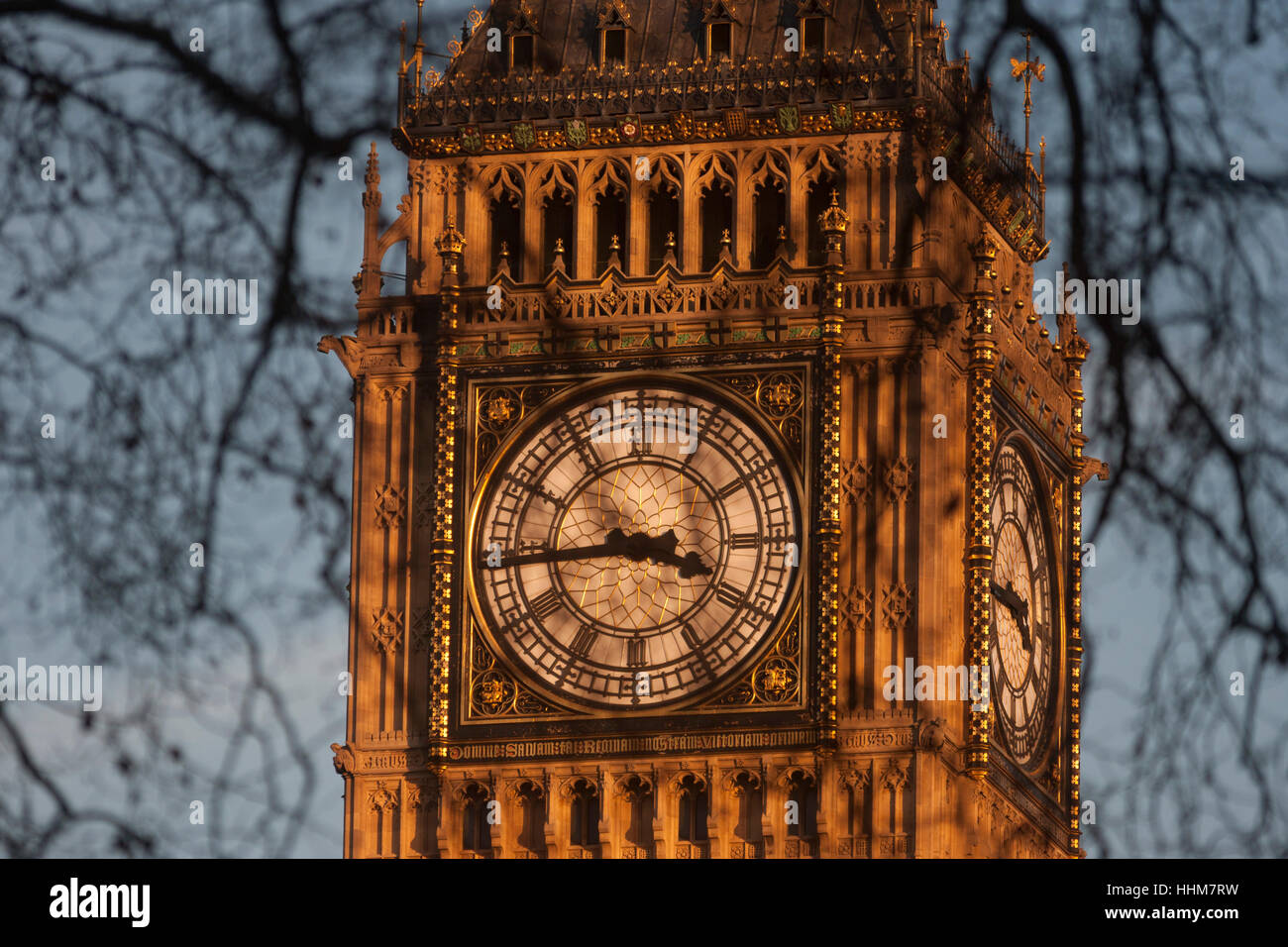 Branches of winter Plane trees in the foreground and the clockface containing the Big Ben bell in the Elizabeth - Stock Image