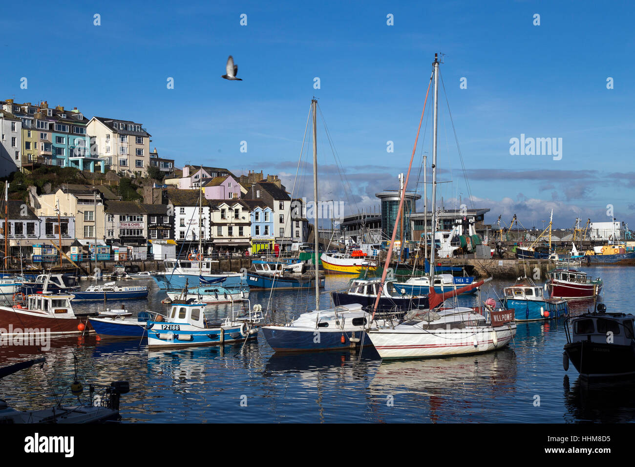 Brixham a small fishing town and civil parish in the district of Torbay in the county of Devon, fishing fleet in - Stock Image