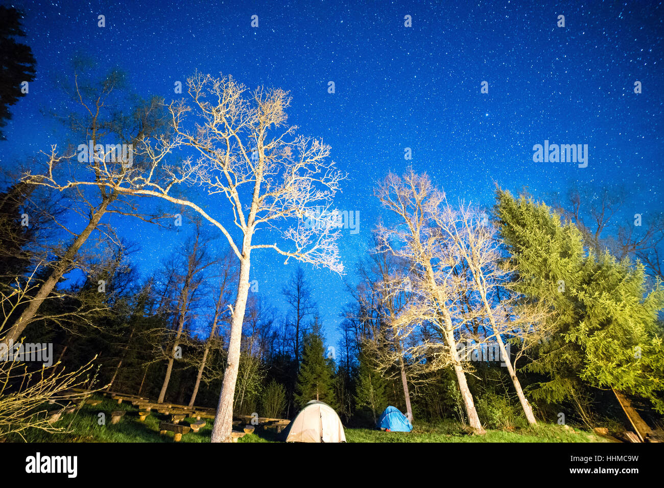 night sky with stars in forest with trees and shadows - Stock Image