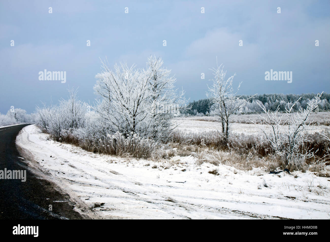 winter landscape with the asphalt road Stock Photo