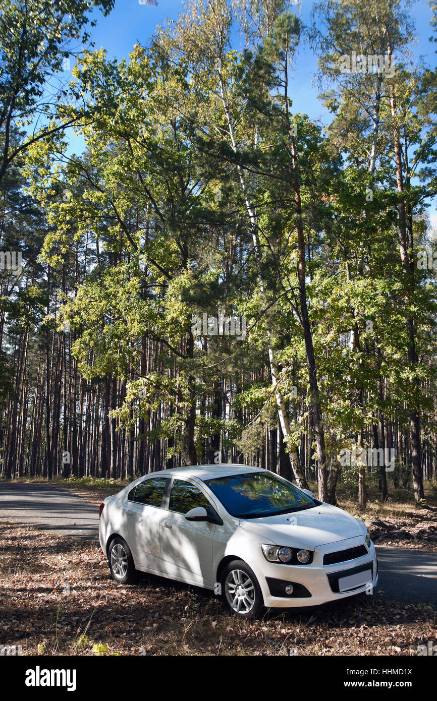 white car in a forest Stock Photo