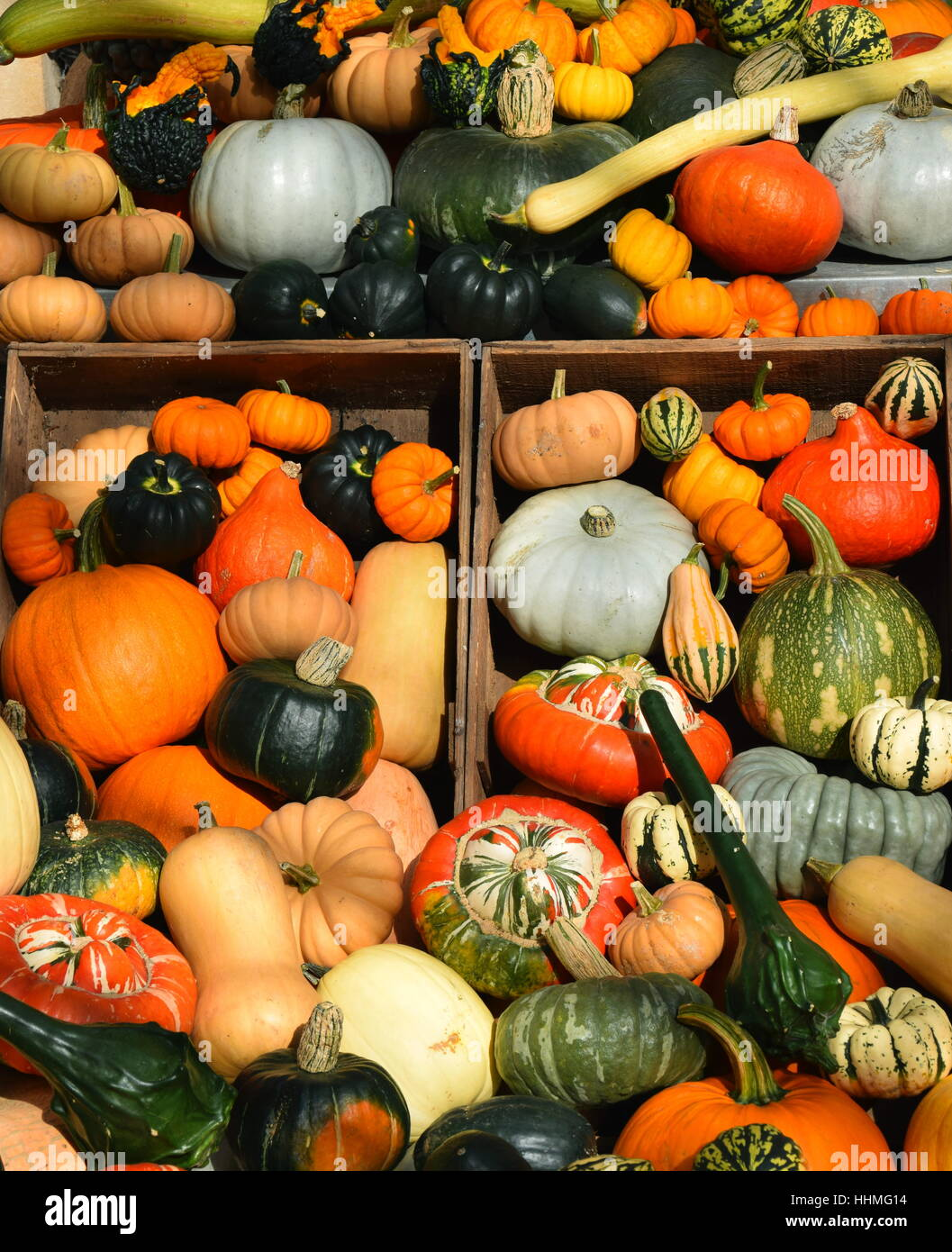 selection of various types of gourds, squashes and pumpkins in wooden boxes - Stock Image