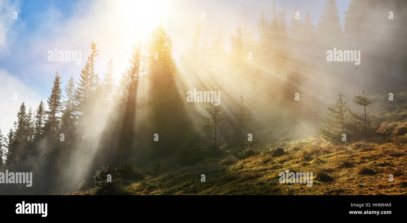 Sunbeams in spring misty forest - Stock Image