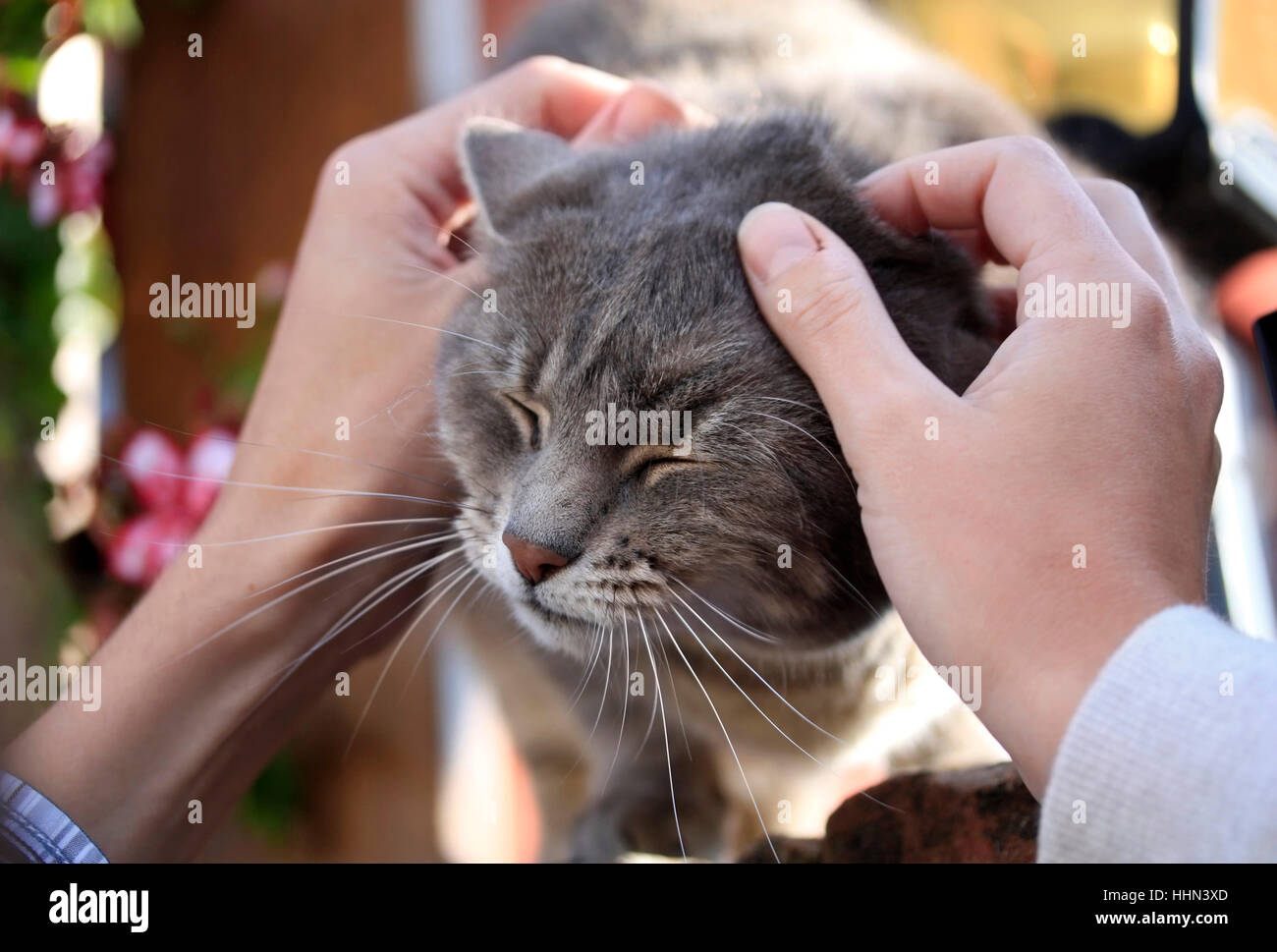 Greeting a nice cat who enjoys being gently petted. Happy moment with your pet. - Stock Image