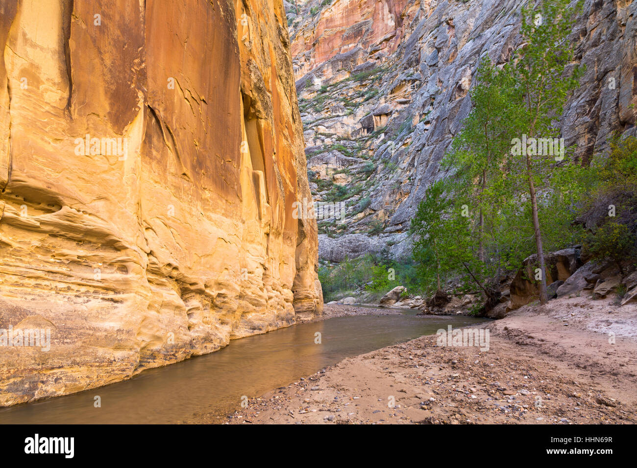 The Escalante River flowing past large sandstone cliffs and cottonwood trees. Grand Staircase-Escalante National Stock Photo