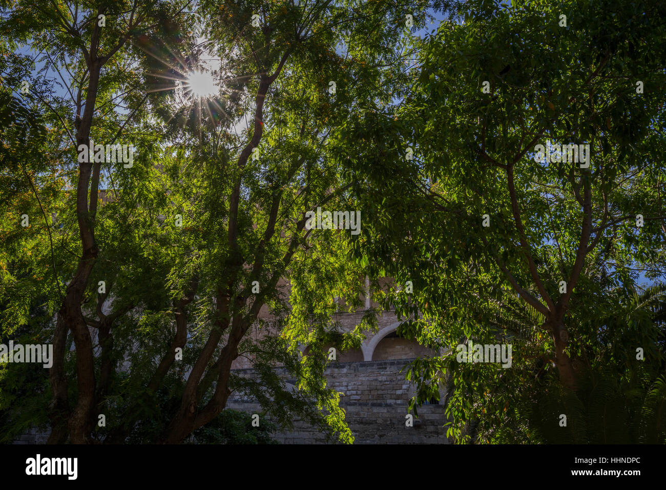 sun shining through leaves and tree on summers day with traditional building - Stock Image