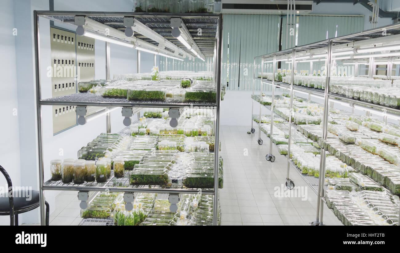 plant tissue culture growing in a bottle on shelf in