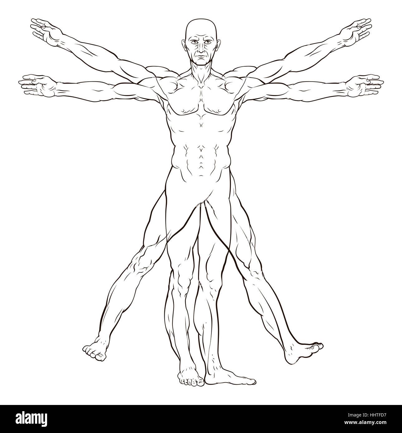 Vitruvian man style human figure like Leonard Da Vinci s anatomy ...