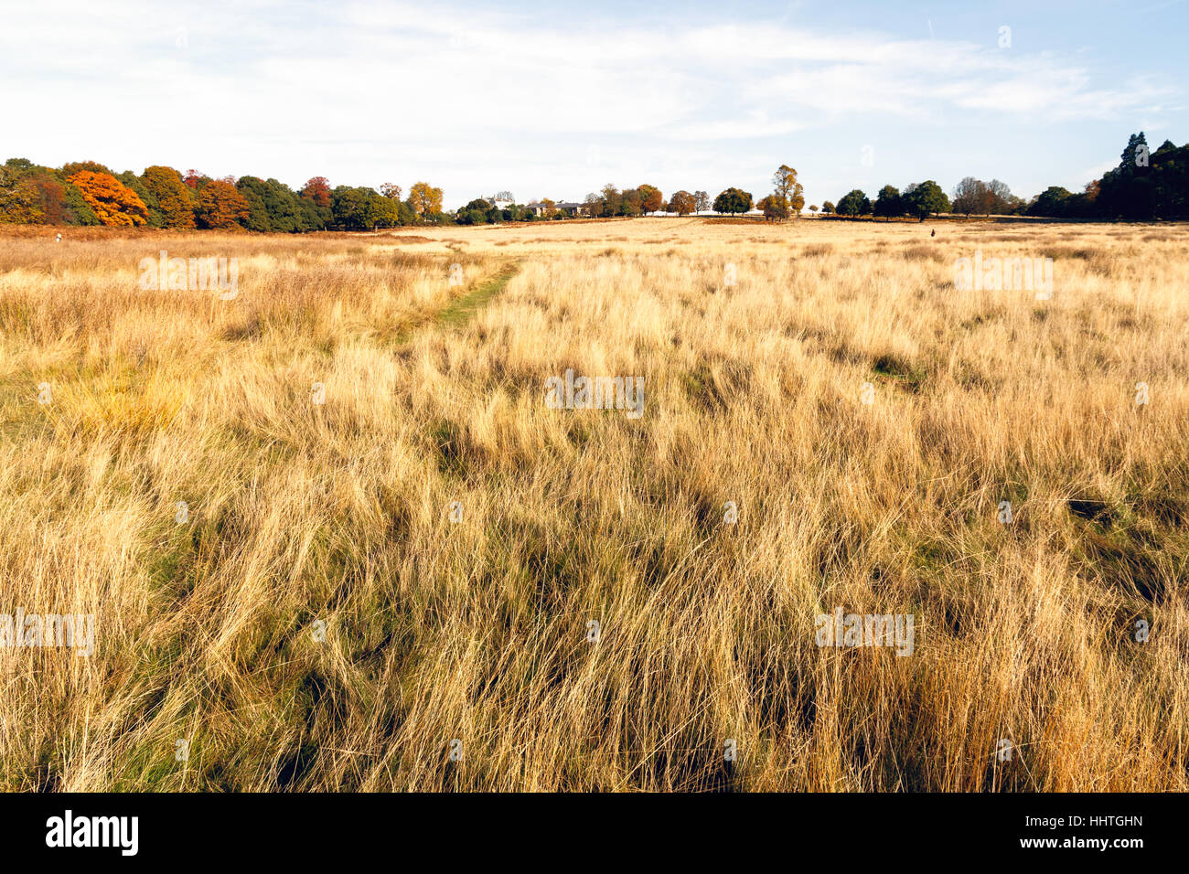 Autumn season of dry grassland in Richmond Park, London - Stock Image