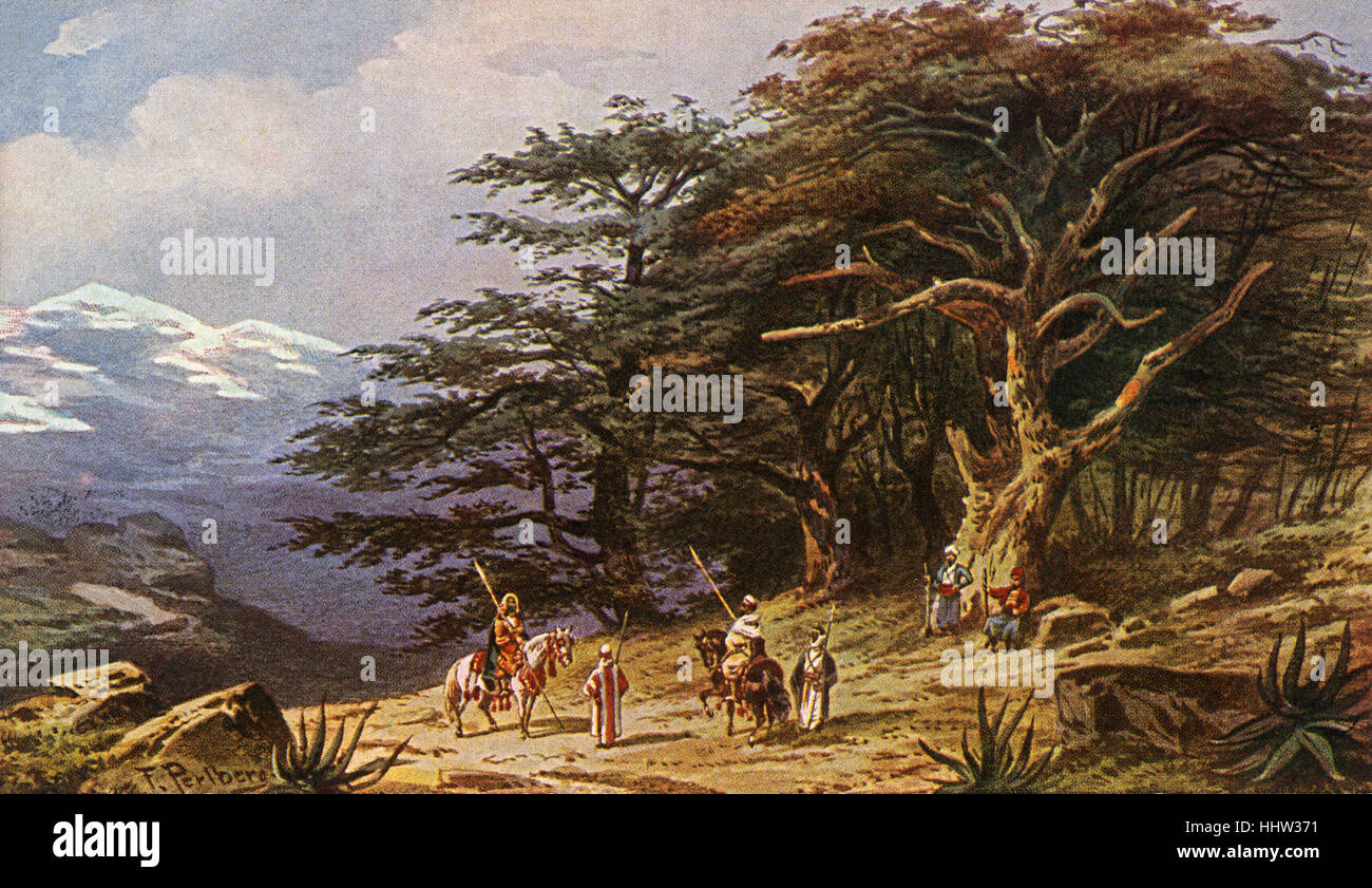 Cedars of Lebanon. Early 20th century postcard. - Stock Image