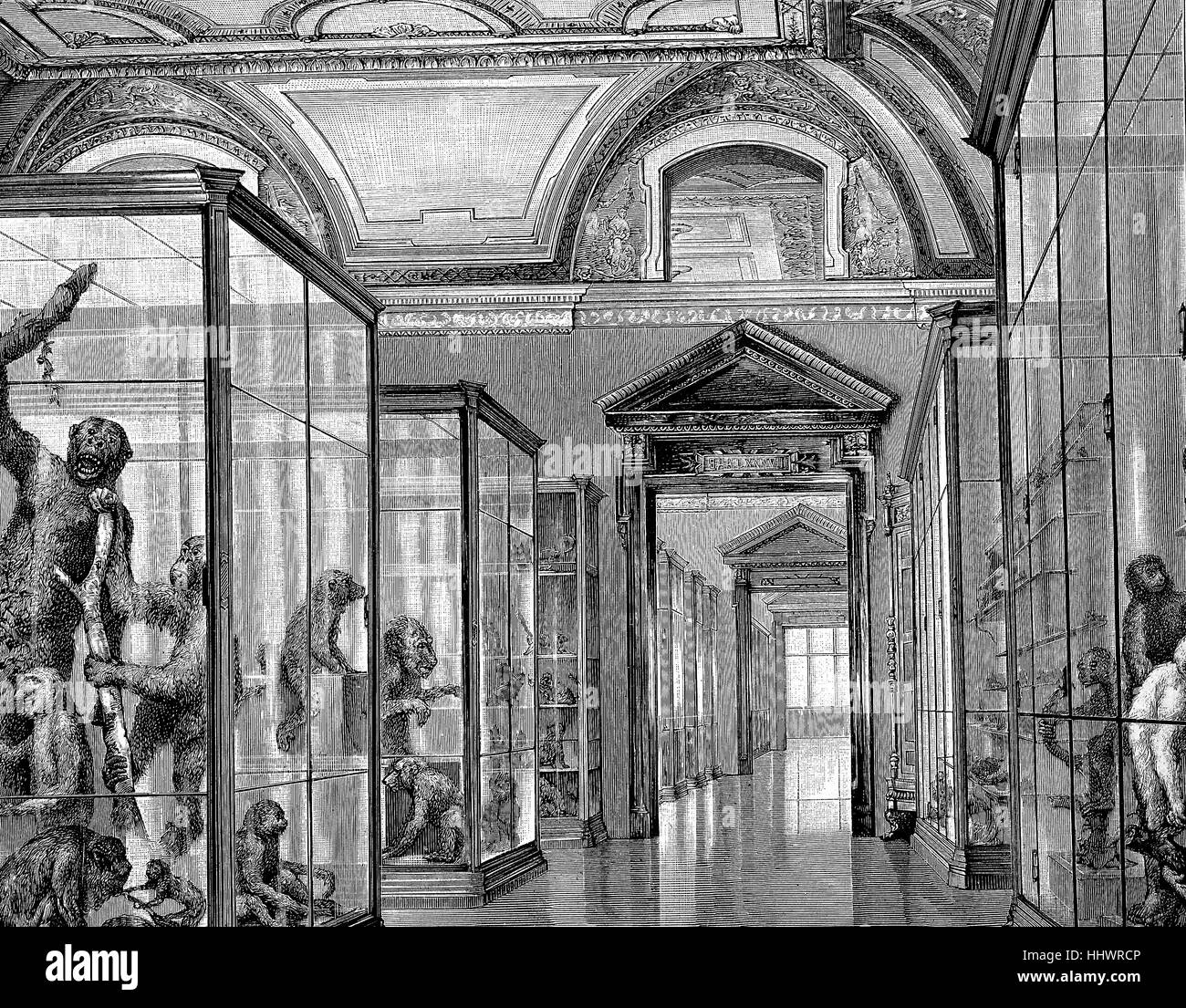 The Affensaal, room of the monkeys, in the Natural History Museum in Vienna, Austria, historical image or illustration, - Stock Image