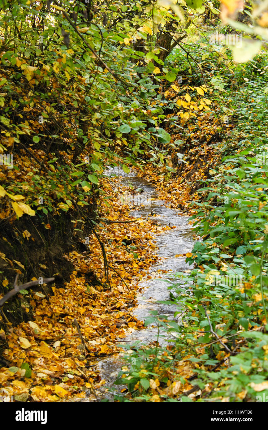 Small stream in spring nature. - Stock Image