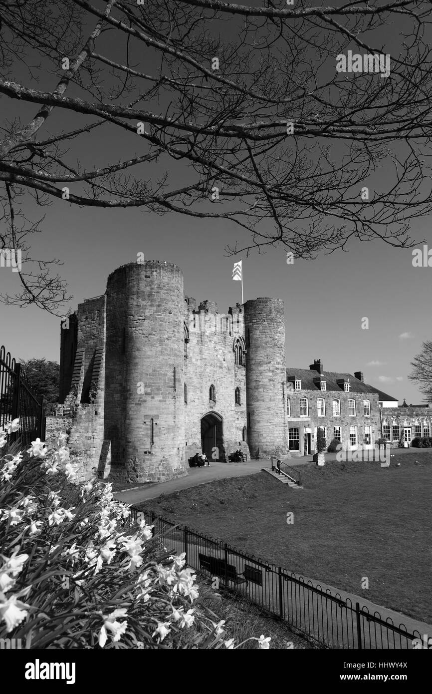 Spring daffodil flowers on the green of tonbridge castle tonbridge town kent england