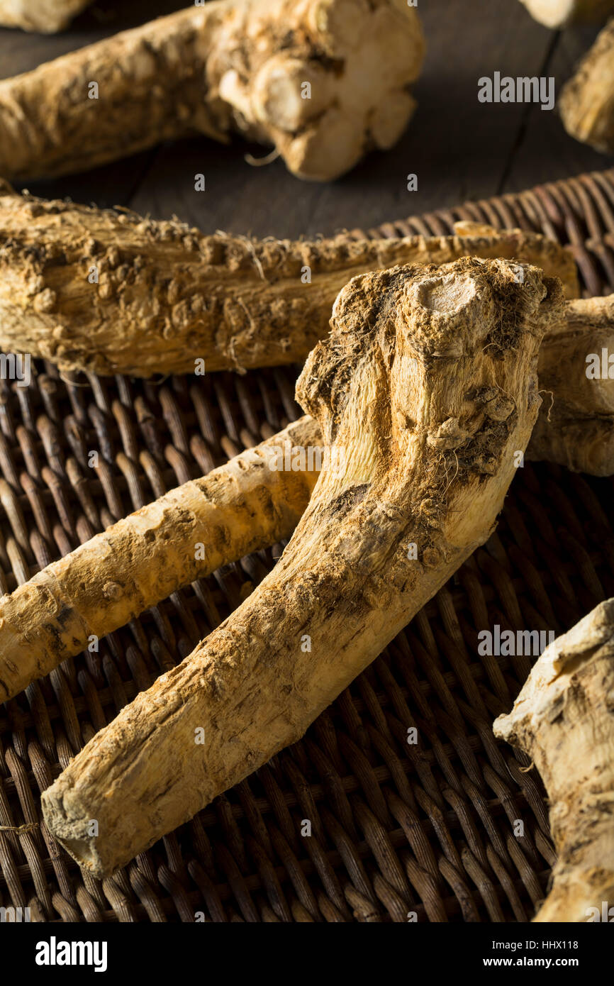 Raw Organic Brown Horseradish Root Ready for Cooking - Stock Image