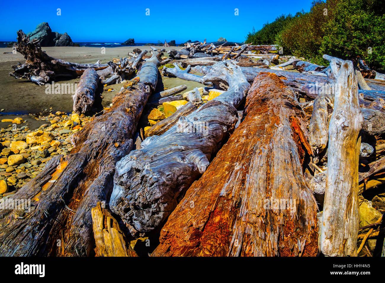 Wonderful Driftwood Oregon Coast - Stock Image