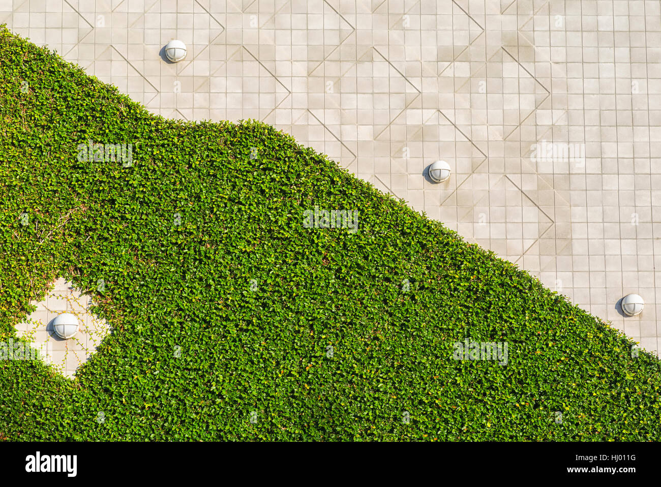 Ivy covered wall, concrete wall with light fixtures, urban geometry. - Stock Image