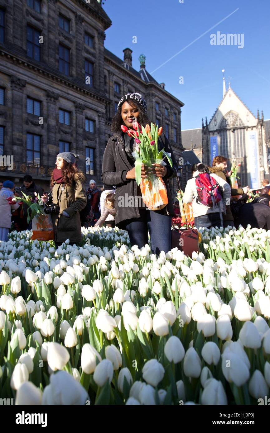 Amsterdam, Netherlands. 21st Jan, 2017. A woman holding tulips poses for photos during the 2017 Dutch National Tulip Stock Photo