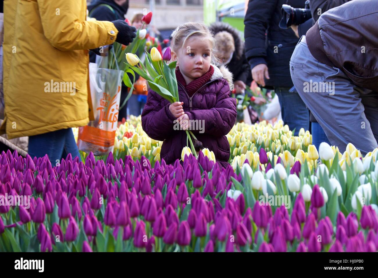Amsterdam, Netherlands. 21st Jan, 2017. A girl holds tulips during the 2017 Dutch National Tulip Day in Amsterdam, Stock Photo