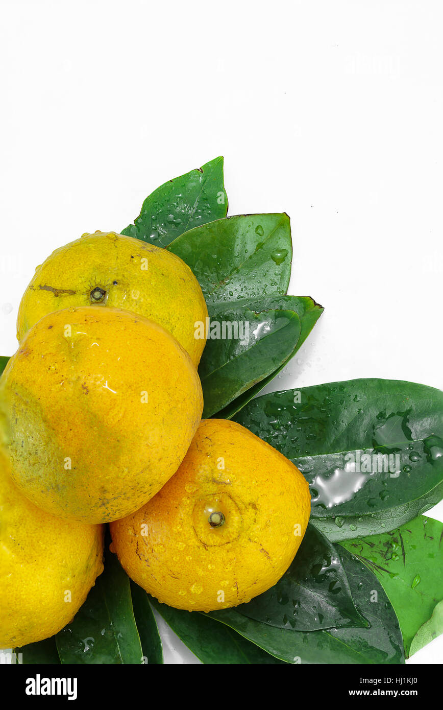 Fresh oranges and leaves on a white background - Stock Image
