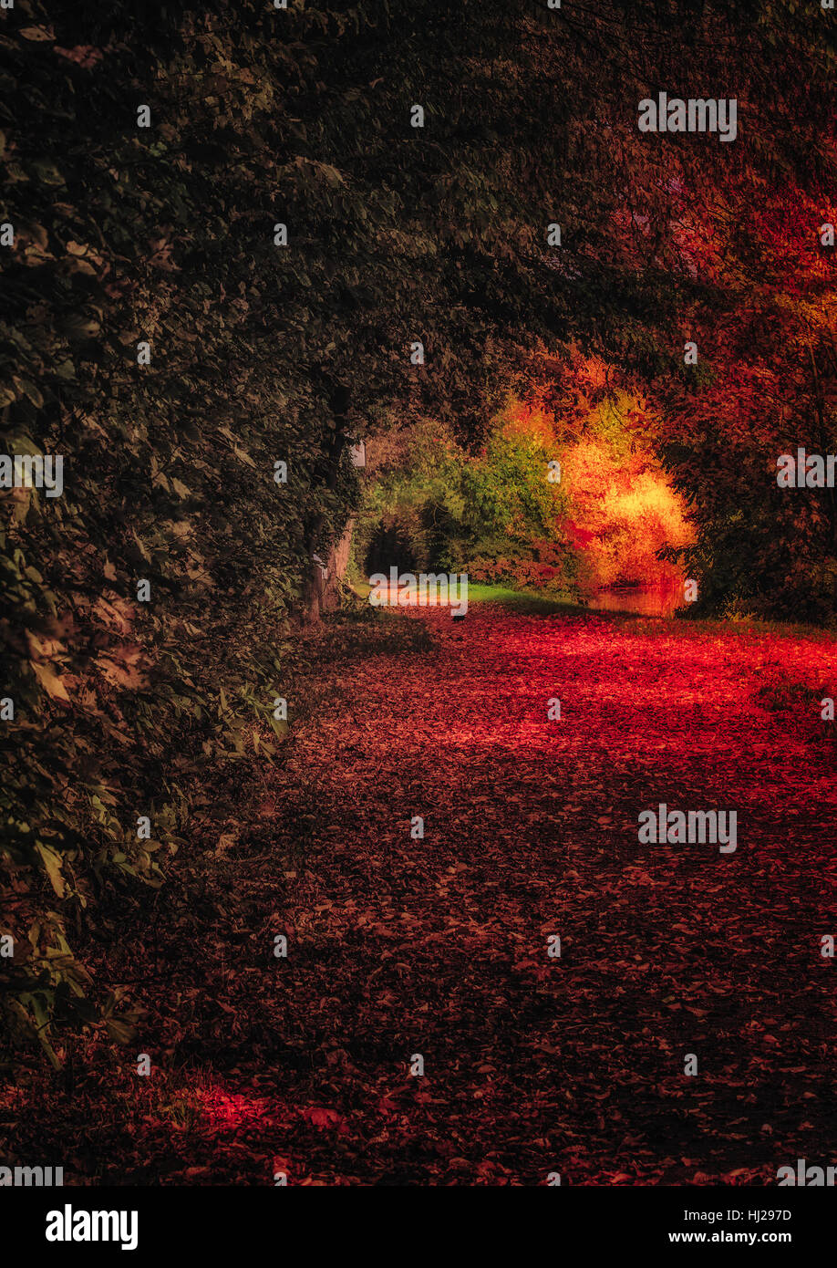 Fine art surrealistic color image of an autumnal hollow path with many leaves taken with intense colors in red and - Stock Image