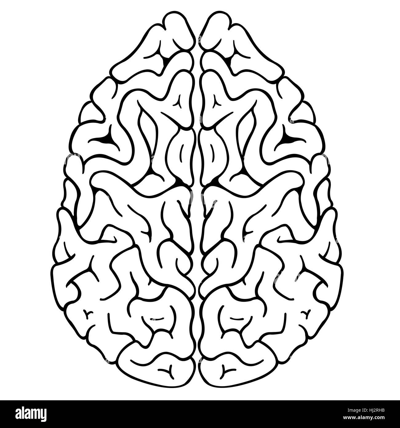 illustration of a brain isolated - Stock Image
