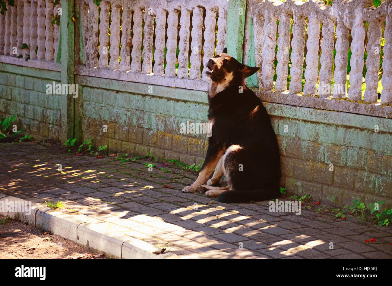 Black Grinning Non-Pedigree Dog Sitting on a Village Street near a Fence on a Sunny Summer Day - Stock Image