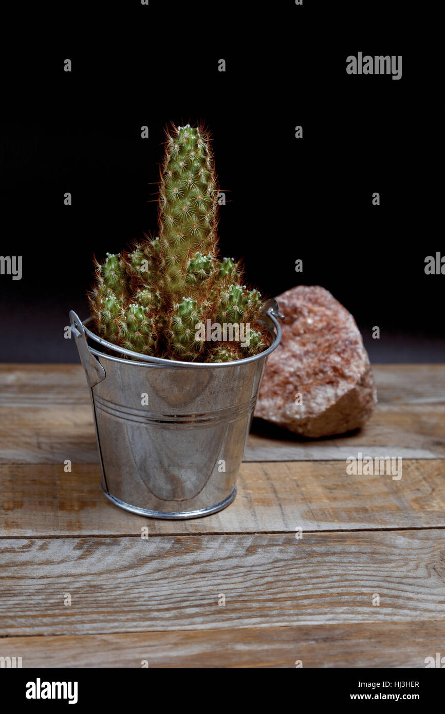 Prickly cactus in a galvanized steel flowerpot next to a pink stone on an old wooden table - Stock Image