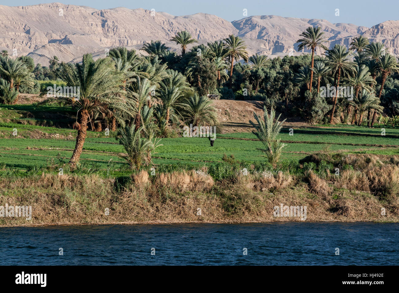 Worker in the field hauling crops along the Nile River ...