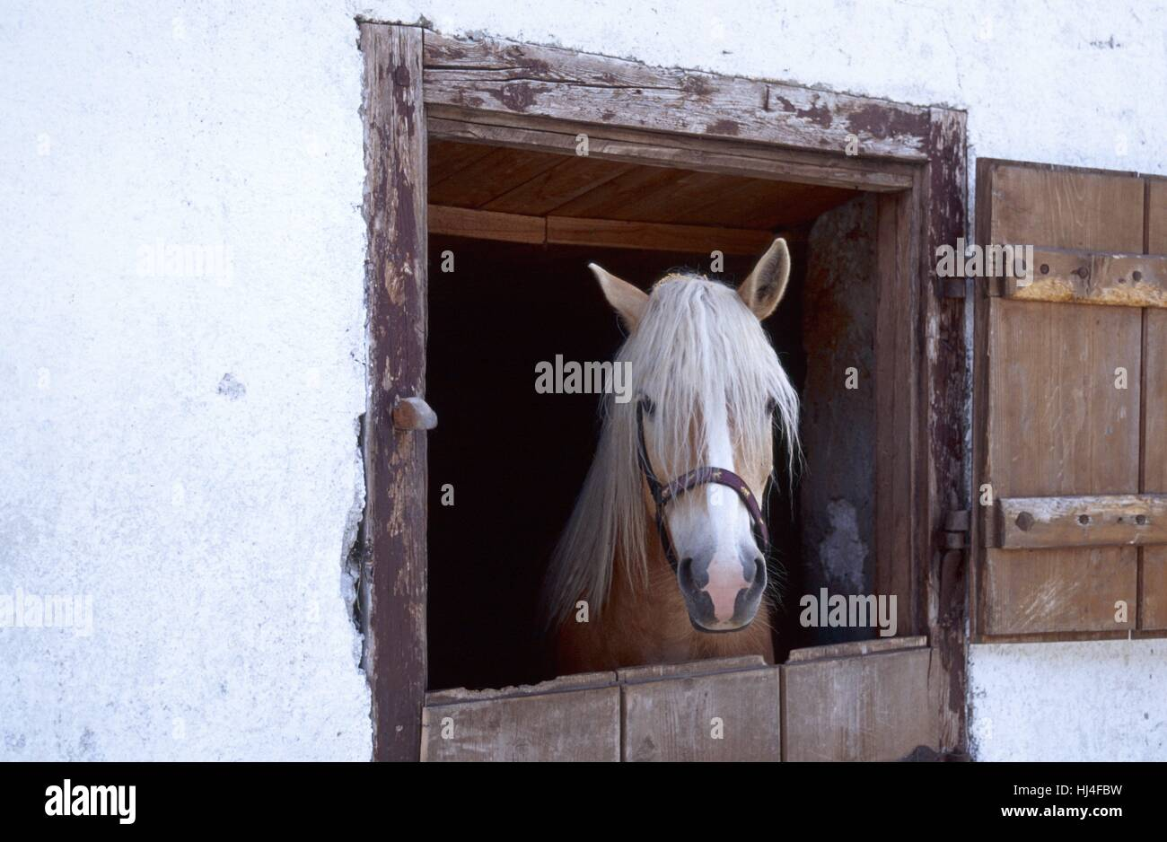 Portrait of horse - Stock Image