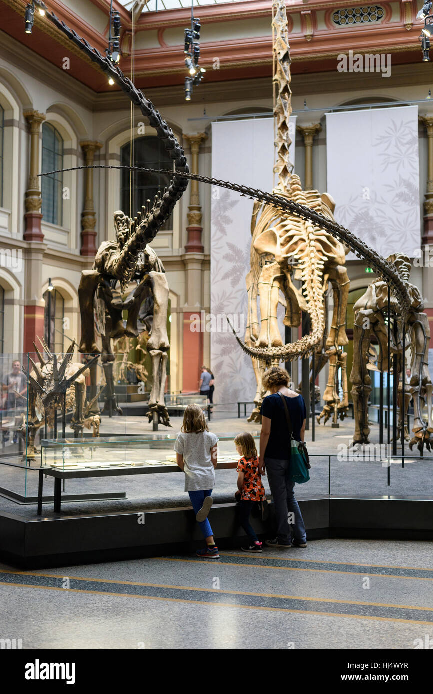 Berlin. Germany. Museum für Naturkunde, visitors in the Dinosaur Hall. - Stock Image