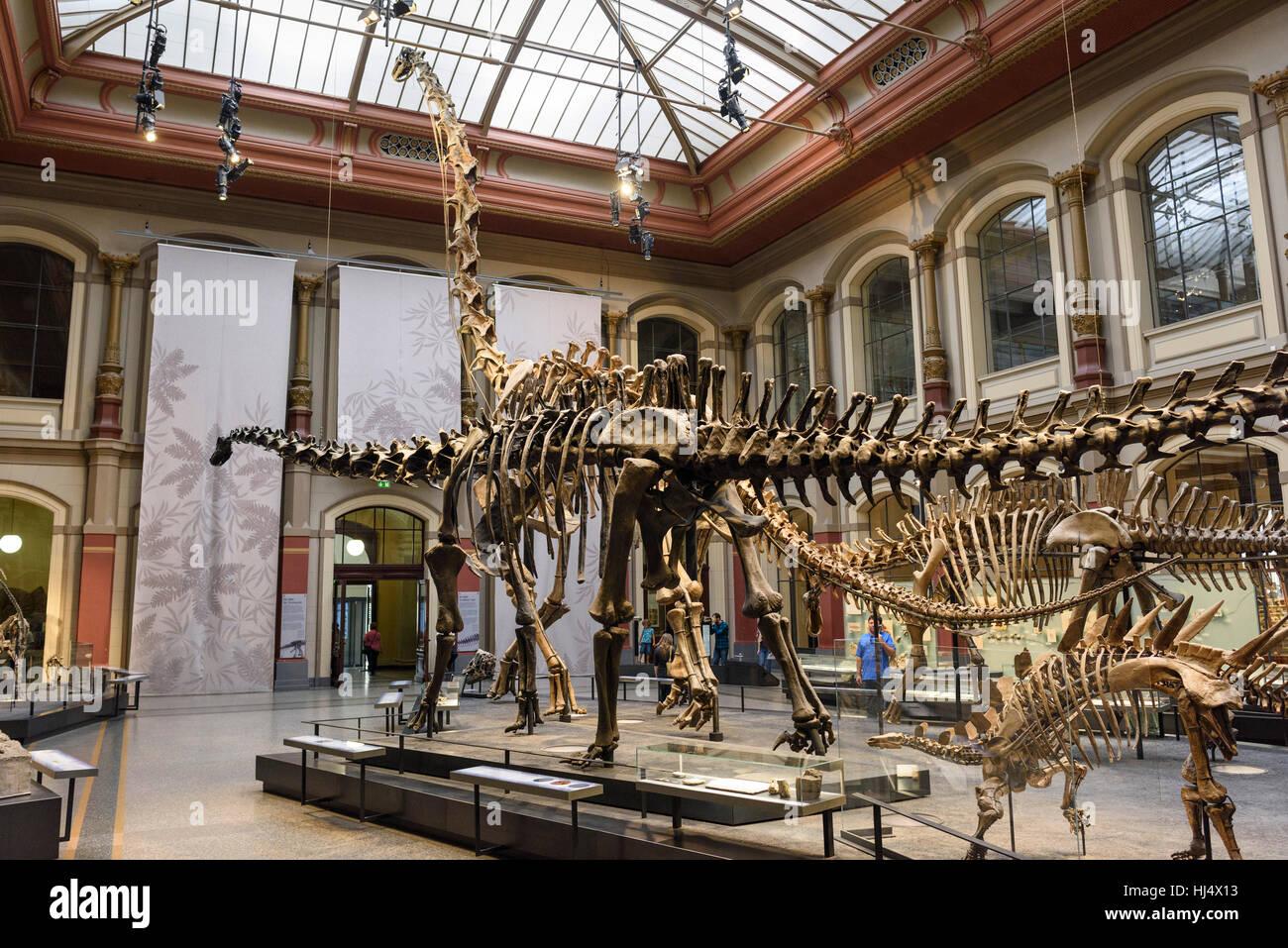 Museum Berlin Naturkunde