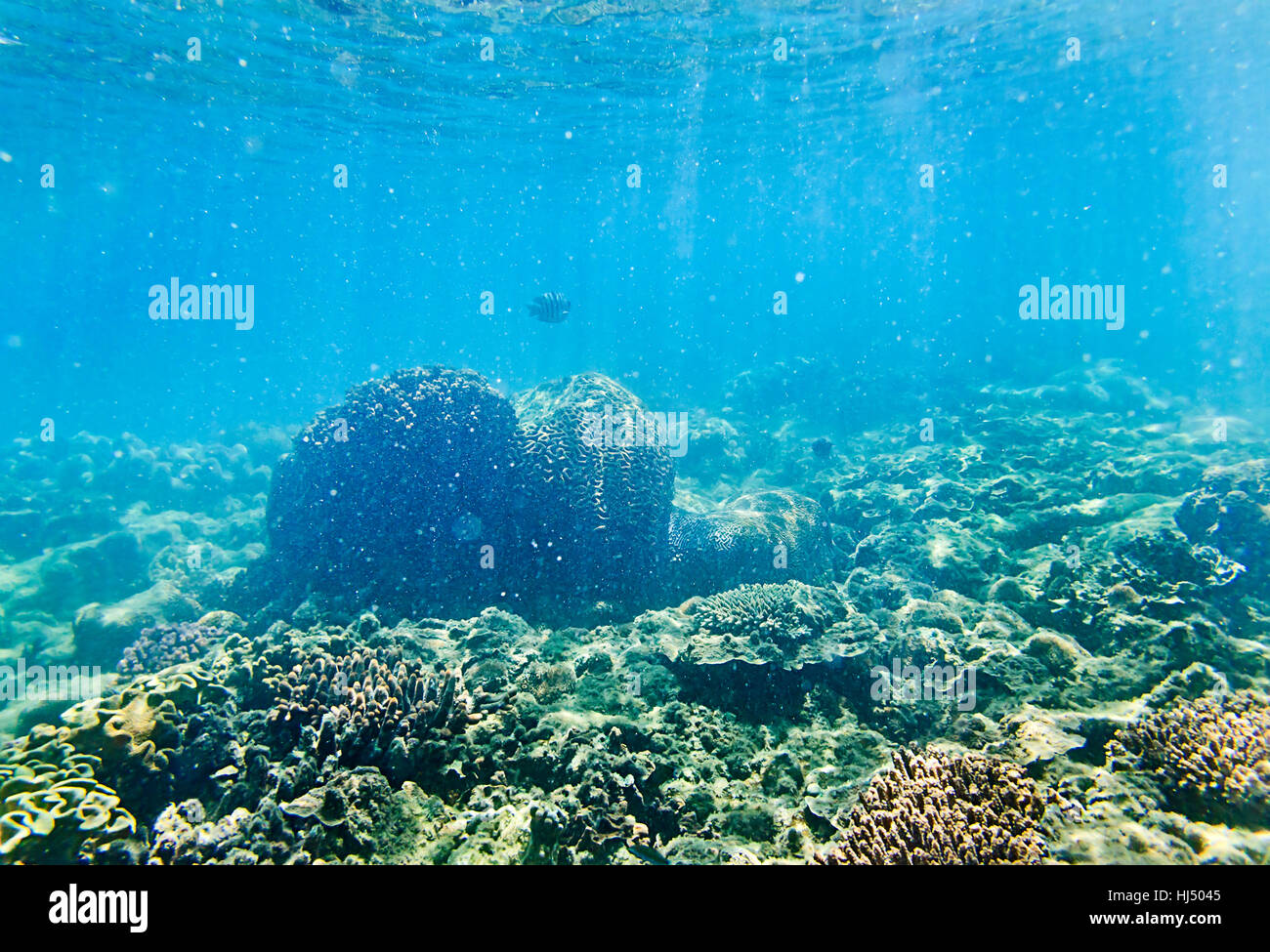 bright sunbeams going through shallow waters of coral sea lighting corals colony and seawater fish of Great Barrier - Stock Image