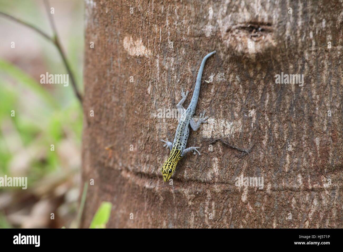 reptile, reptiles, crawler, tanzania, zanzibar, reptile, reptiles, crawler, Stock Photo