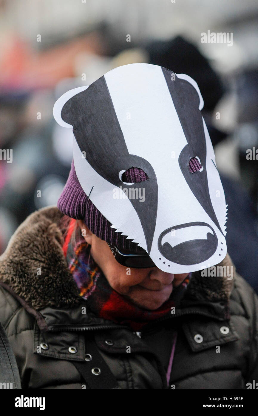 """London, UK.  26 January 2017.  Activists take part in a """"Save the Badger"""" protest, marching from Leicester Square Stock Photo"""
