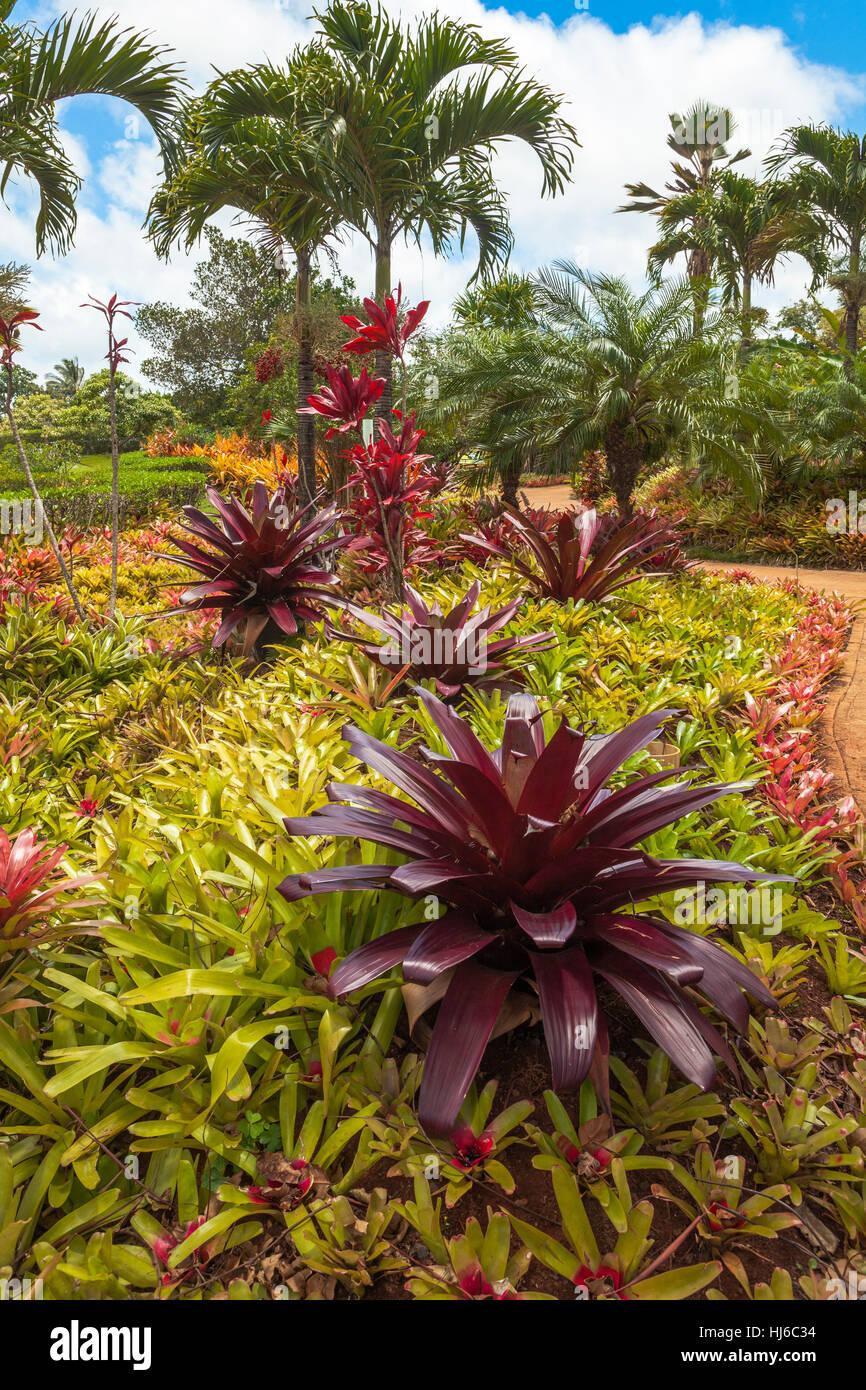 hawaiian garden Stock Photo: 131677592 - Alamy