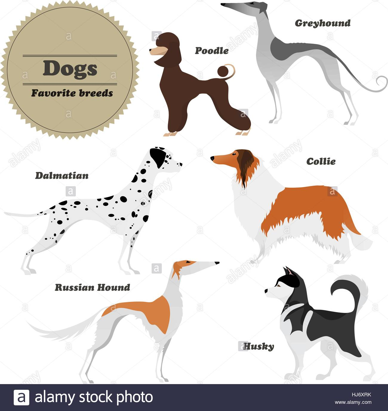 Image set of dogs. Greyhound, Russian hound, Husky, Poodle, Dalmatian, Collie. - Stock Vector