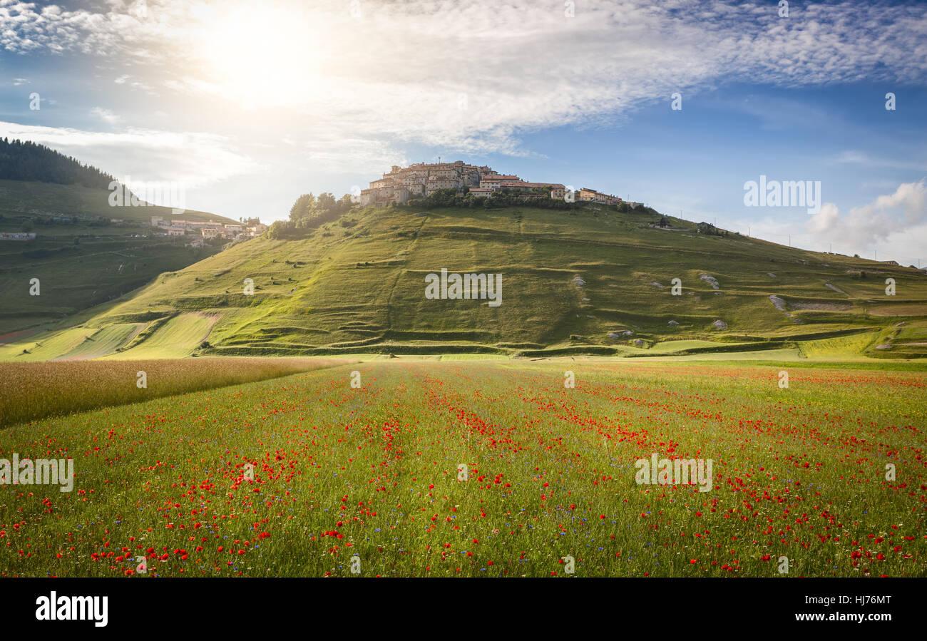 Castelluccio in a blooming field of poppies, Piano Grande, Italy Stock Photo