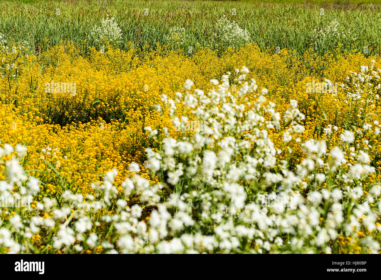 Kinds of yellow and white flowers in the meadow note shallow depth kinds of yellow and white flowers in the meadow note shallow depth of field mightylinksfo