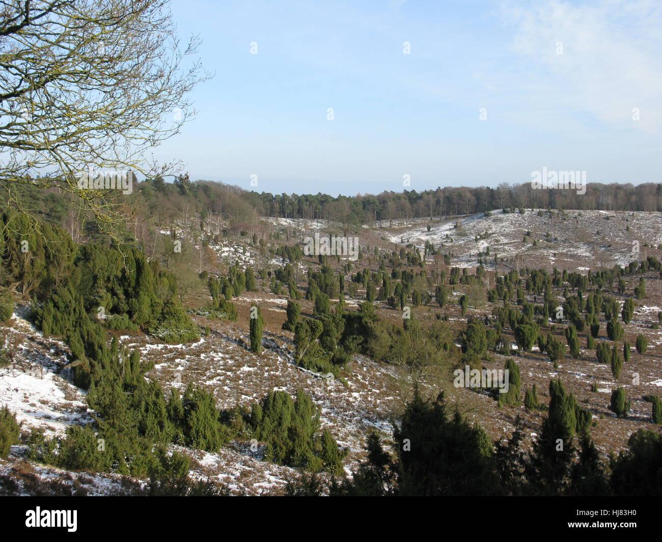 lneburg heath in winter Stock Photo