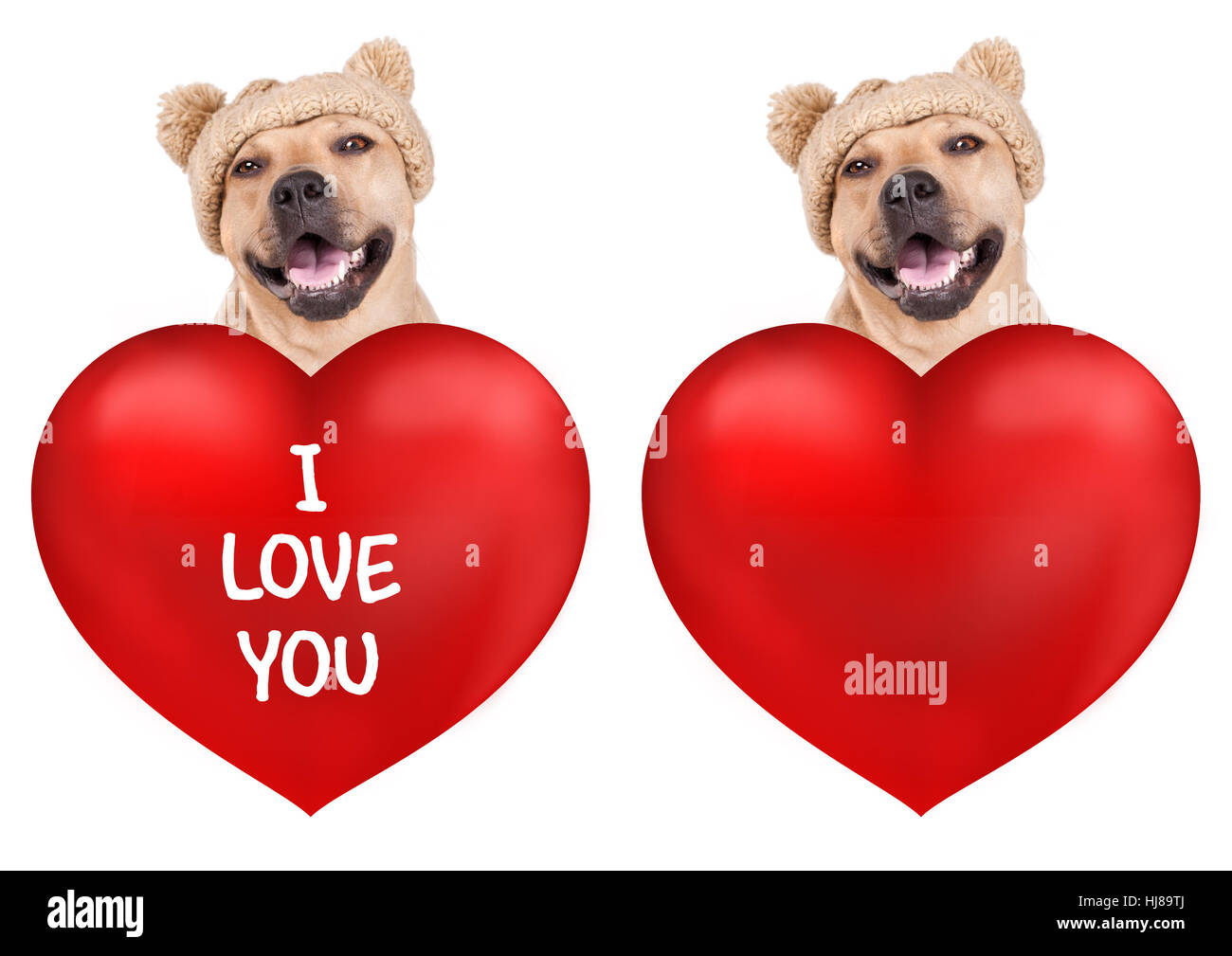 lovely cute smiling dog with big valentine's day heart, isolated on white background Stock Photo