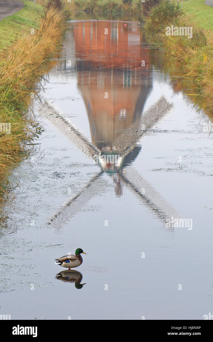 Reflection of a windmill in a canal with a duck, Waringsfehn, Lower Saxony, Germany - Stock Image