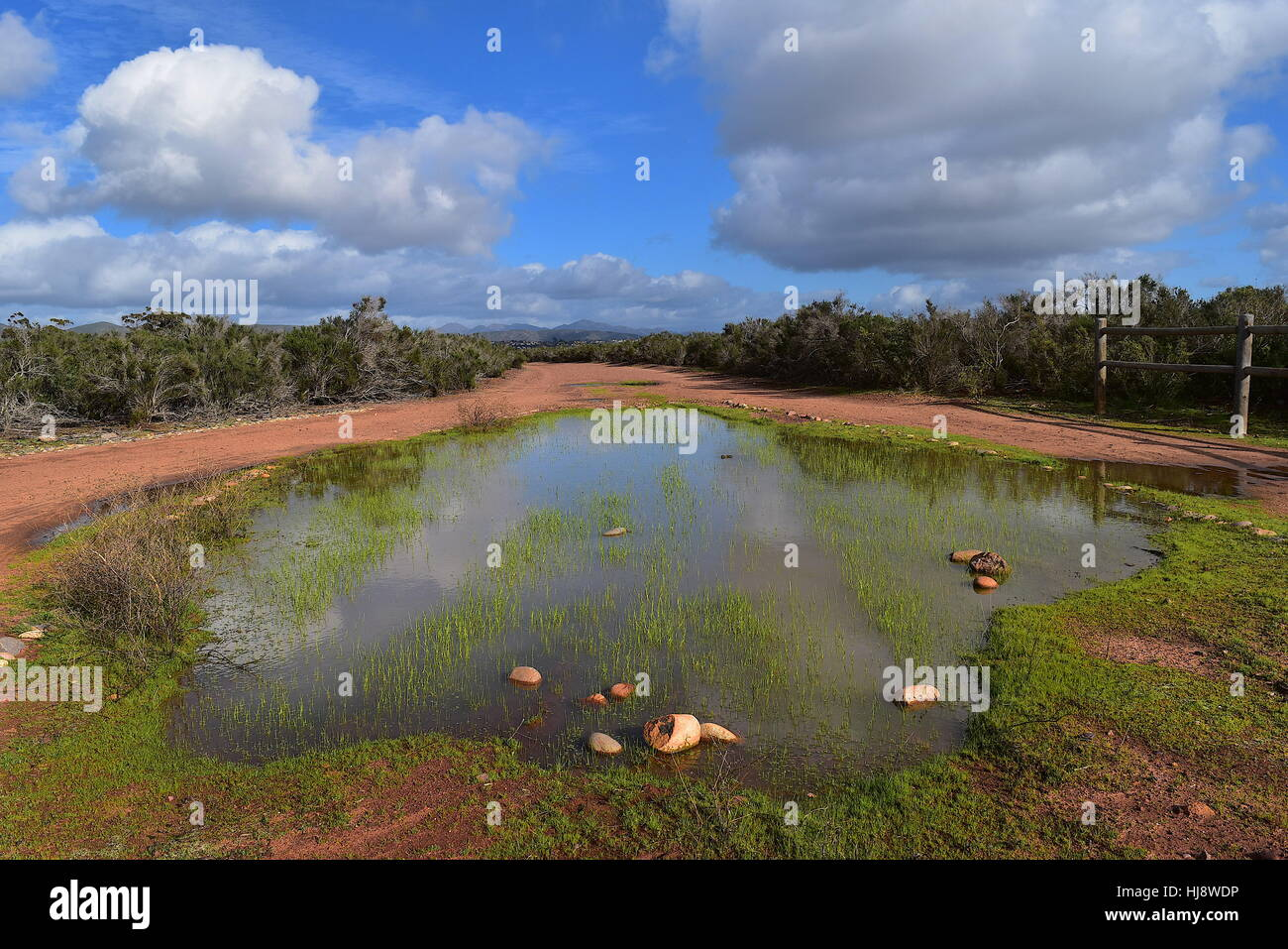 Vernal pool at Del Mar Mesa Open Space in San Diego, California - Stock Image