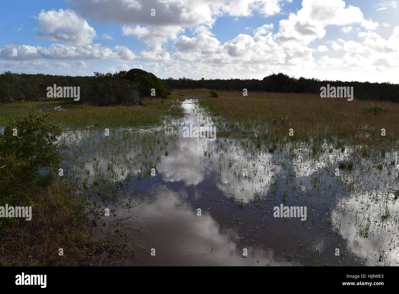 Vernal pools at Del Mar Mesa Open Space Preserve, San Diego, California - Stock Image