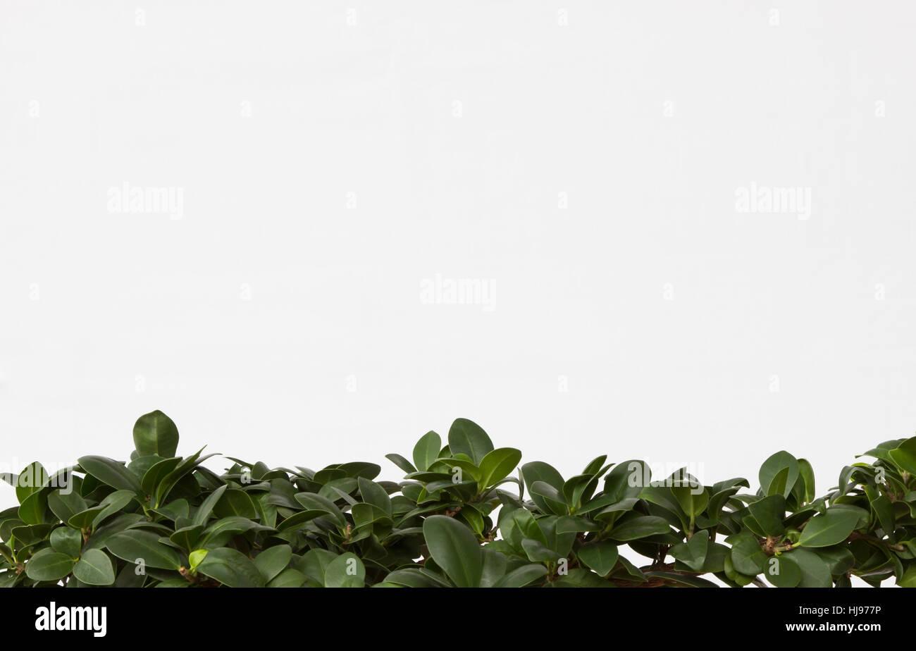 green, edge, description field, page, sheet, frame, framework, tree, green, - Stock Image