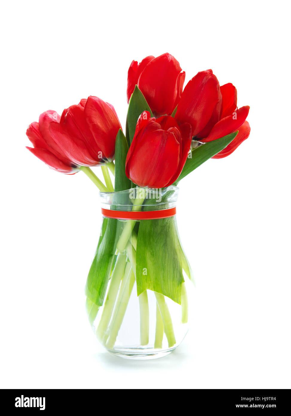 Flower flowers plant tulips spring bouquet mother day stock flower flowers plant tulips spring bouquet mother day birthday red izmirmasajfo