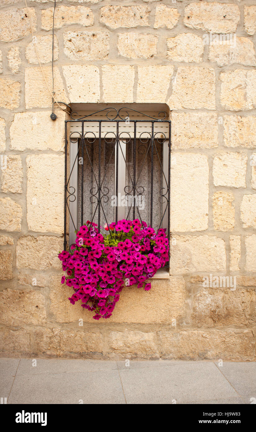 flower, flowers, plant, cottage, country, home, windows, bricks, life, exist, - Stock Image