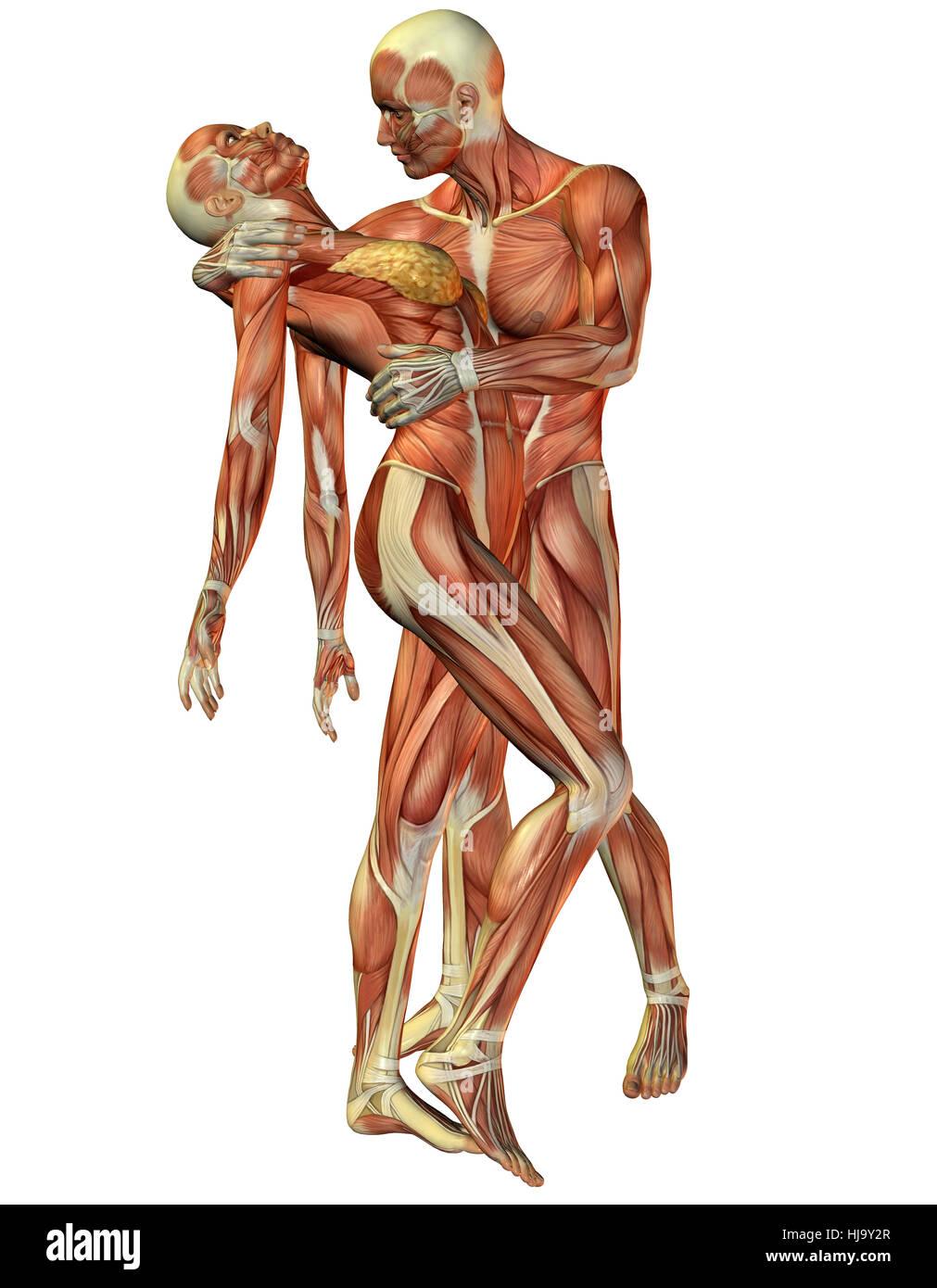 3d Rendering Muskel Frau und Stock Photos & 3d Rendering Muskel Frau ...