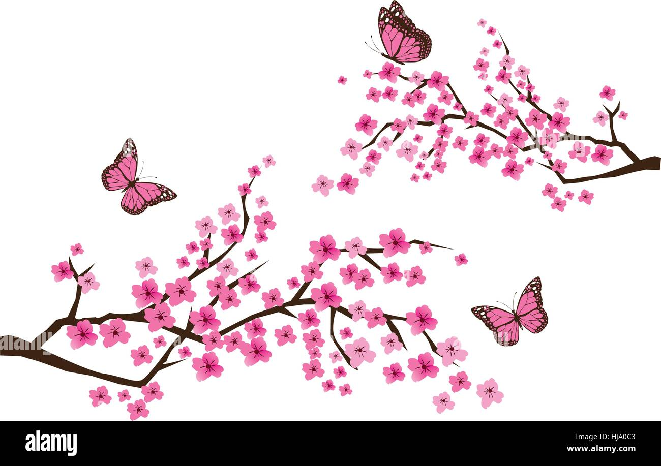 4283fa559 vector illustration of cherry blossom branches with butterflies ...