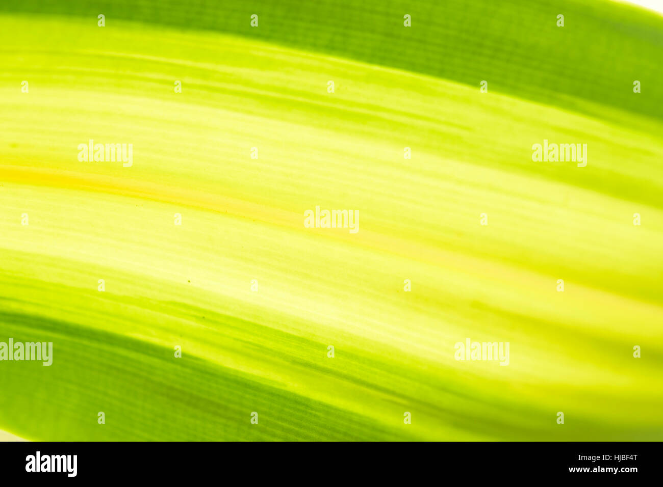Green Background Texture Abstract Lime Light Art